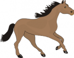 Ararua Pony Club